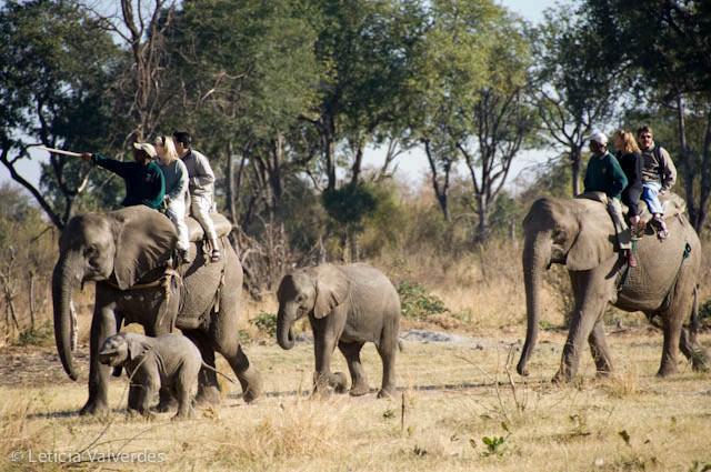 Elephant-Pepper-12.jpg